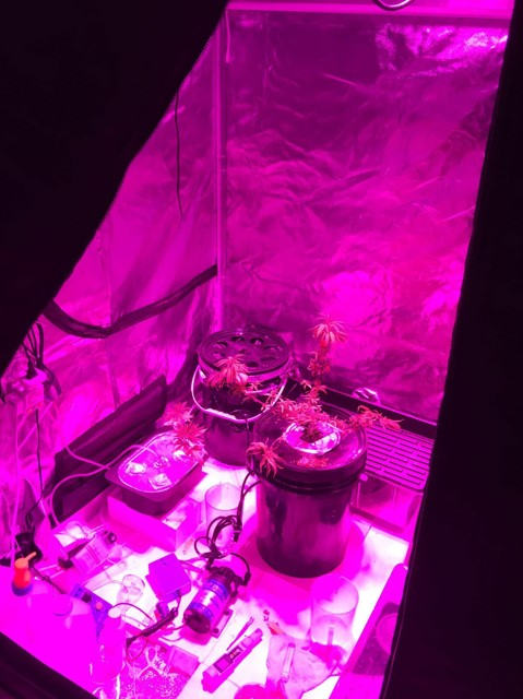 Photo-1: Two cannabis plants, seized in CNB operation on 3 September 2016