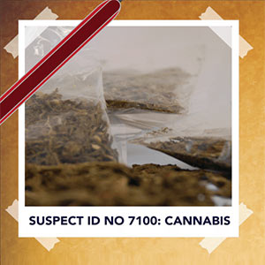 Criminal-Fact-Sheet-Cannabis-thumbnail