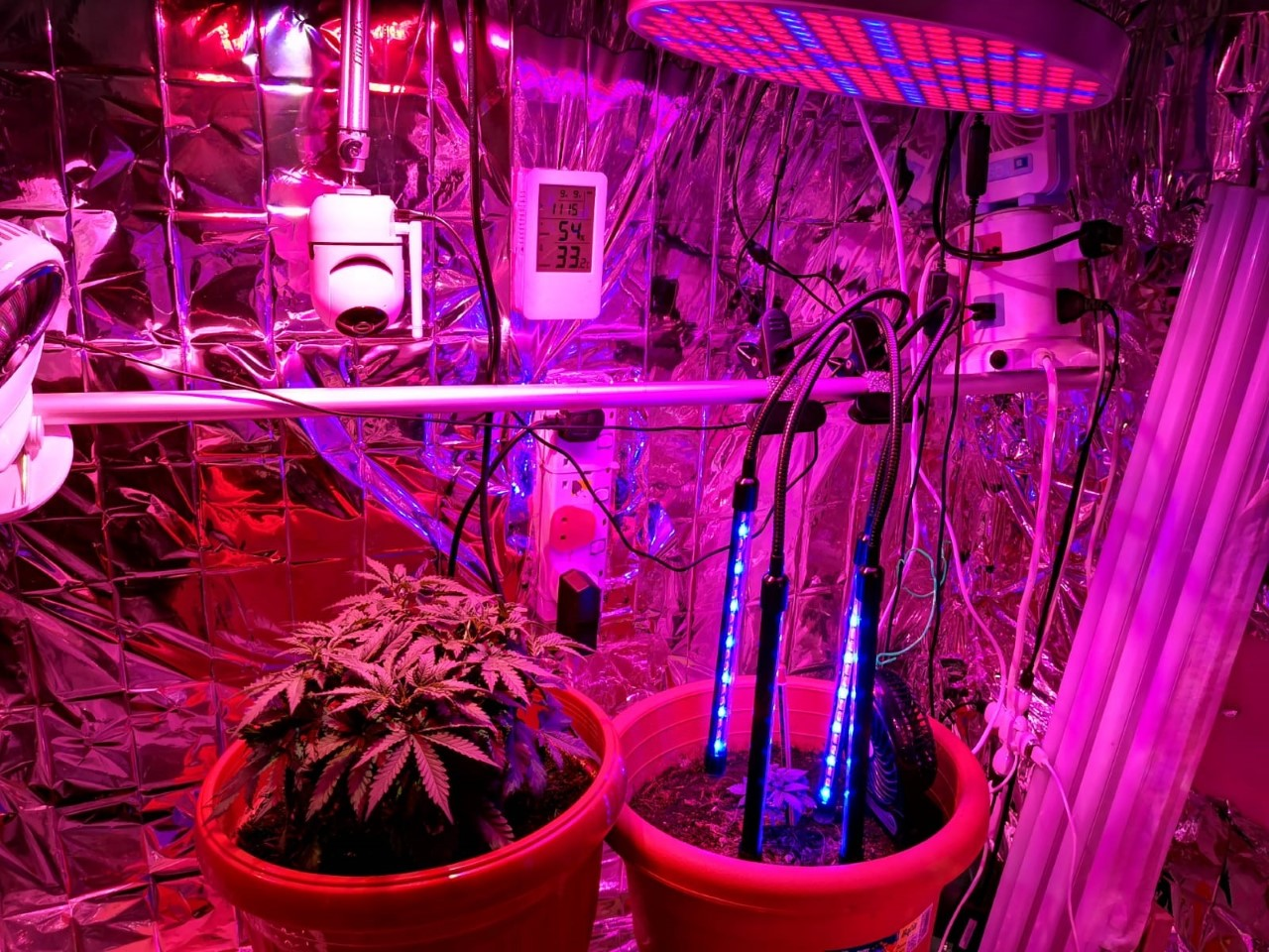 Photo-3 (CNB): View of interior of makeshift greenhouse, erected within a residential unit, raided by CNB on 9 September 2019.